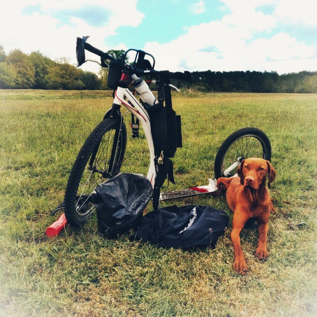 Tretroller-Tour mit Hund